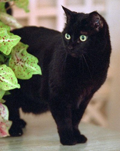 "India ""Willie"" – cat (July 13, 1990 – January 4, 2009)"