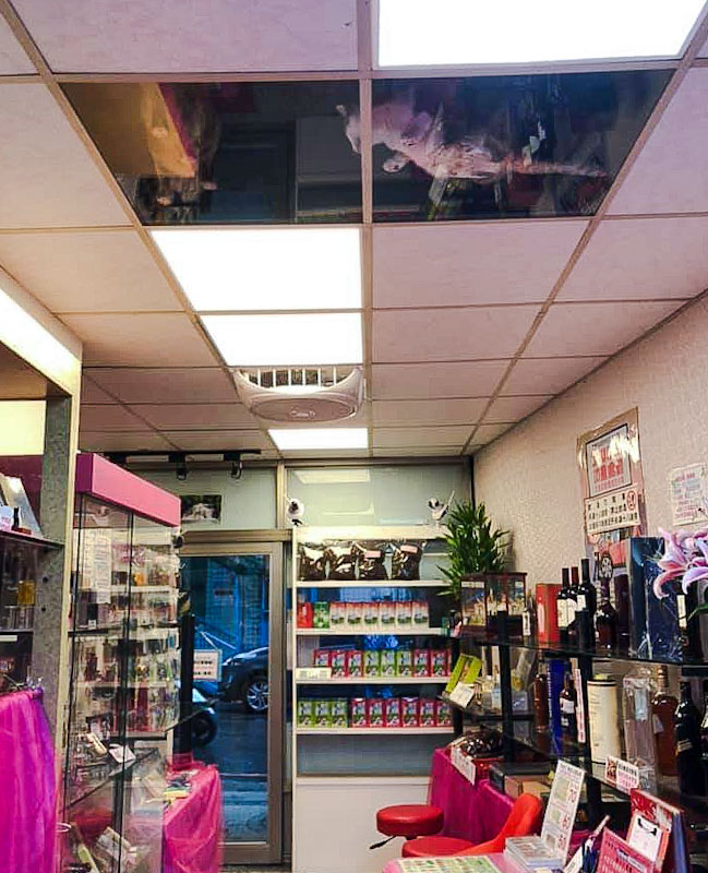 Japanese shop owner replaces ceiling tiles with transparent ones for their cats