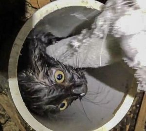 Kitten hoisted from Colorado sewer pipe with towel rope