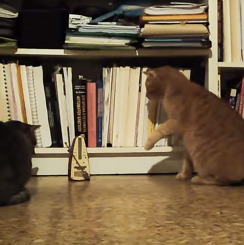 Metronome as a cat toy