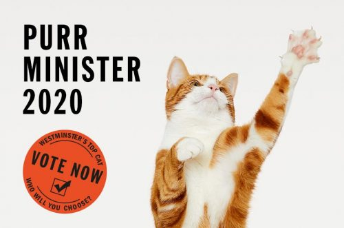 Purr Minister competition at Battersea