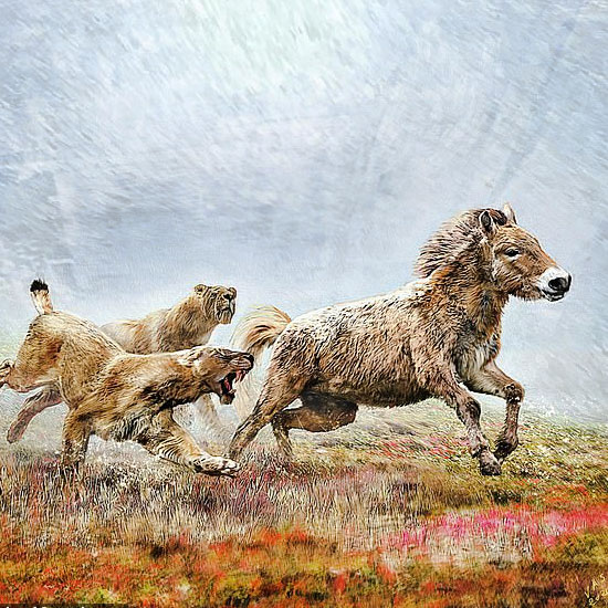 Sabre-toothed cats endurance hunting in packs in ancient times. Illustration by University of Copenhagen