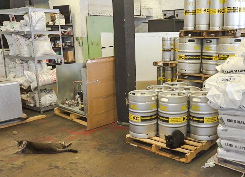 TNR'ed feral cats protect a brewery from rats