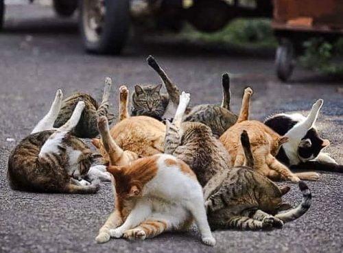 Unflattering cat photo challenge