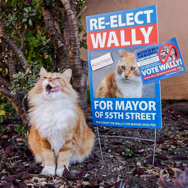 Wally a candidate for Mayor of Oakland