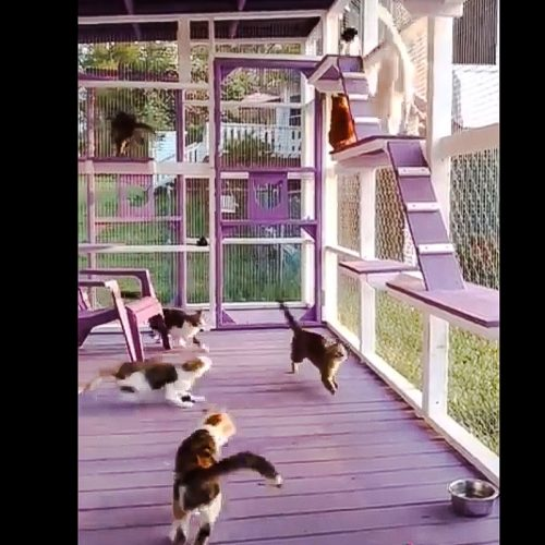 Whistle trained cats in catio
