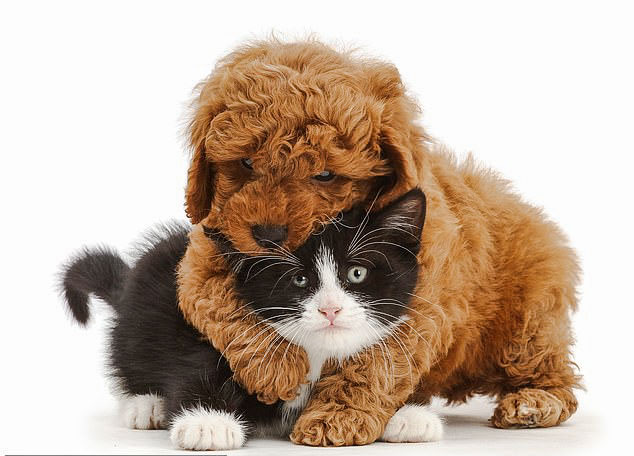 Cat and dog picture