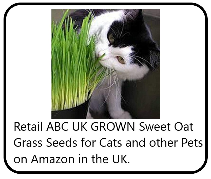 Grass seed for cats