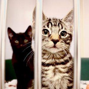 Assisi kitten
