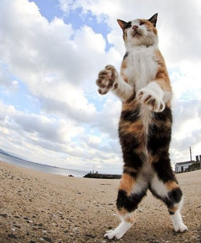 Temporary bipedal cat!