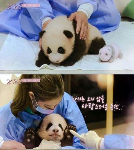 Blackpink members handle panda cub