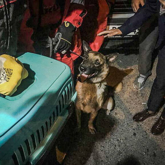 Bob a rescue dog who saved a cat trapped under earthquake rubble