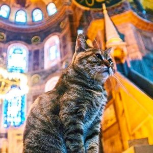 Resident cat, Gli, at Hagia Sophia Mosque in Istanbul has passed away
