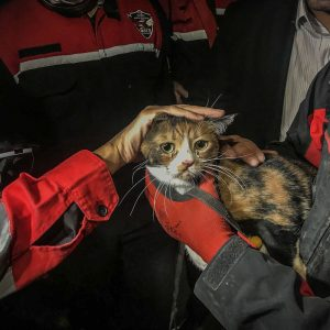 Calico cat rescued from rubble of earthquake by rescue dog