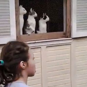 Cat television