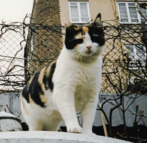 Delilah - Freddie Mercury's favorite cat (probably)