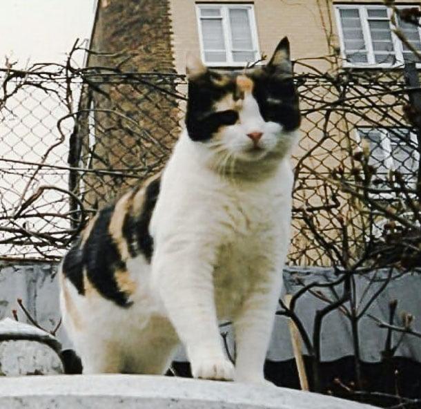 Delilah - Freddie Mercury's favorite cat (probably)