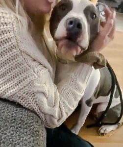 Kylie tries to calm down her pitbull as he sees a new kitten for the first time