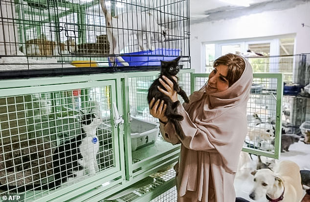 Maryam al-Balushi in her home surrounded by rescue cats