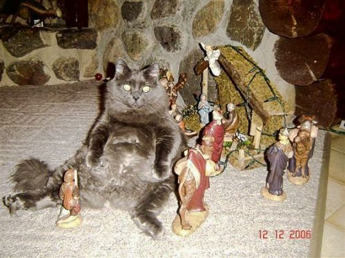 Proof that a cat was in the stables with Mary and Jesus!