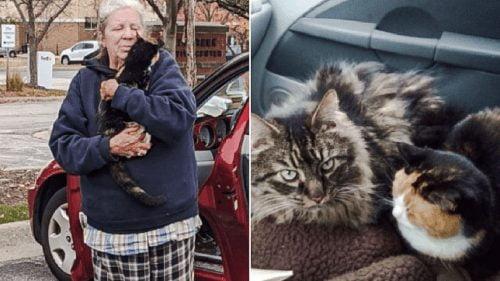 Ruth Van Heel and her 2 cats