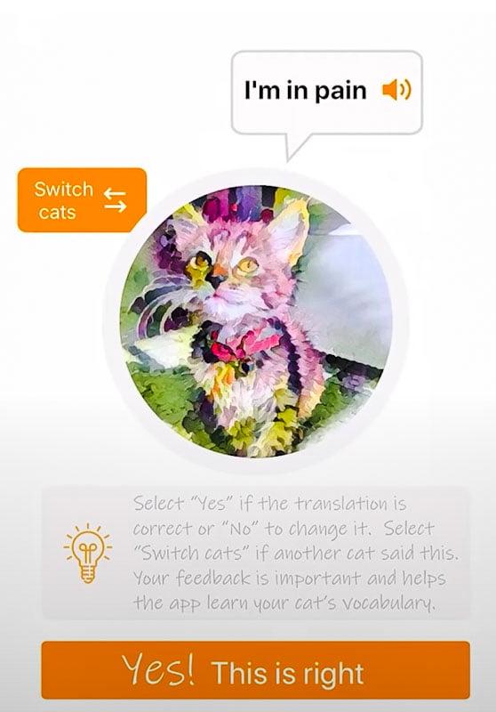 Screenshot from MeowTalk app