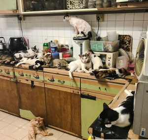 Singapore cat hoarder seeks help