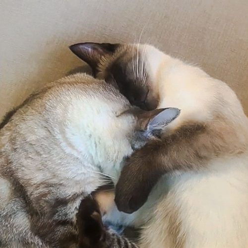 Two cats love each other