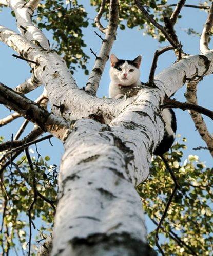 Cat in tree. Is she stuck?