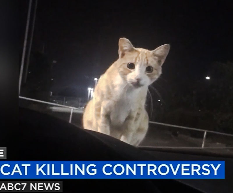 Cat killing controversy