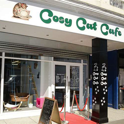 Cosy Cat Cafe may have to close