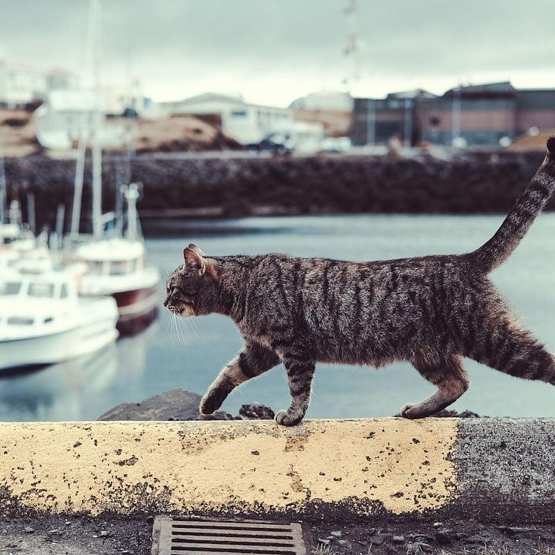 Free spirit cat