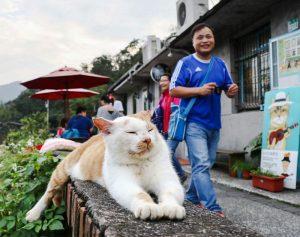 Houtong Taiwan's 'cat village'