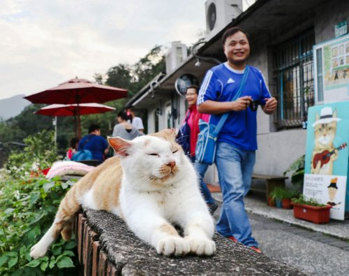 Houtong Taiwan's 'cat village'
