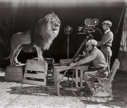 Jackie the second lion used for MGM's opening credits