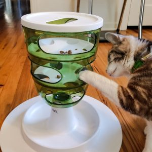 Puzzle cat feeder.