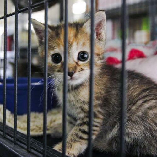 San Diego animal shelter kitten