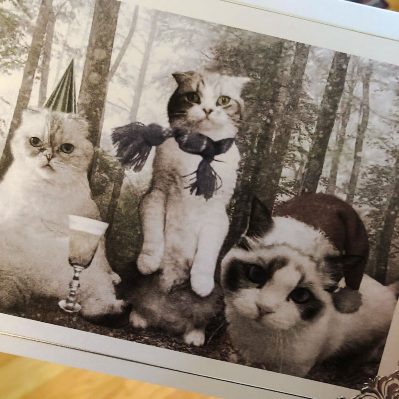 Taylor Swift Christmas card featuring her cats