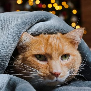 Wallflower cat