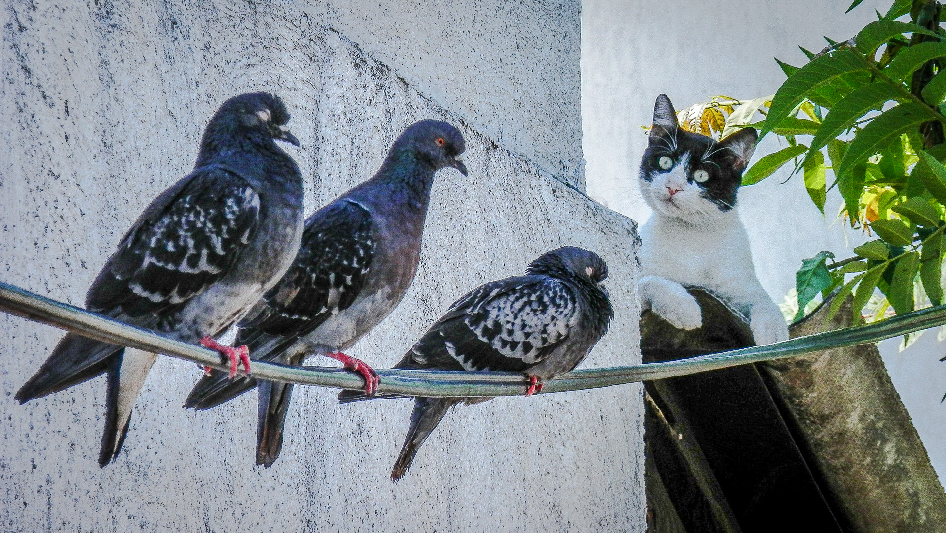3 birds and cat