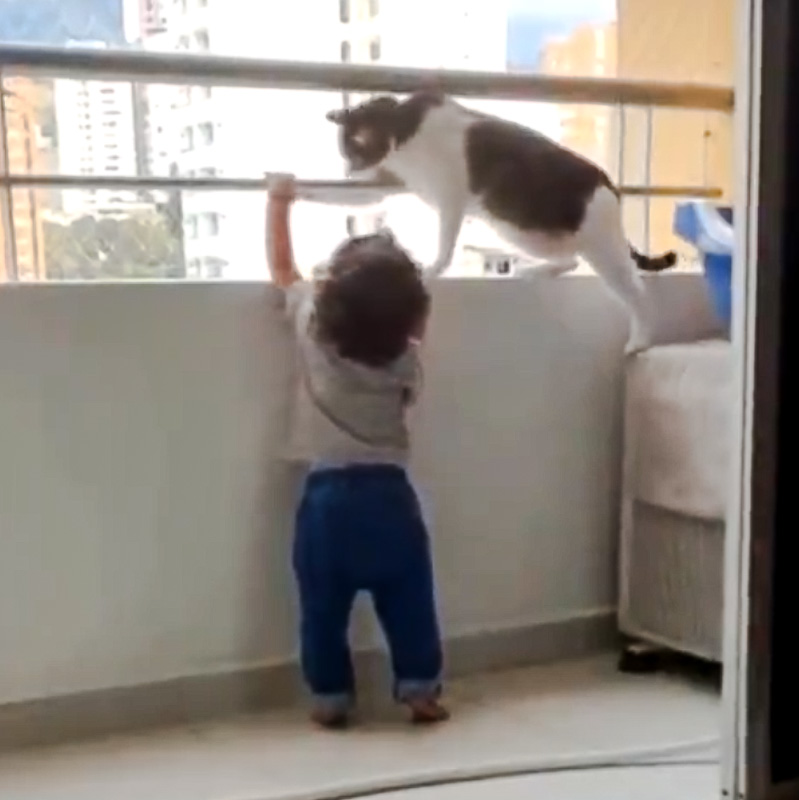 Cat acting as mom to this toddler as she has learned the behavior by observation