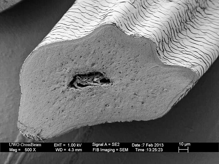 Cat whisker under a microscope