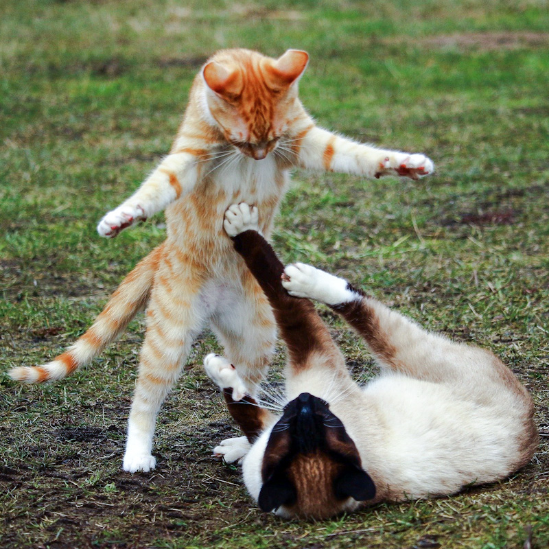 Cats playing is good exercise