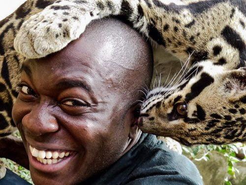 Clouded leopard nibbles Patrick Ayree's ear