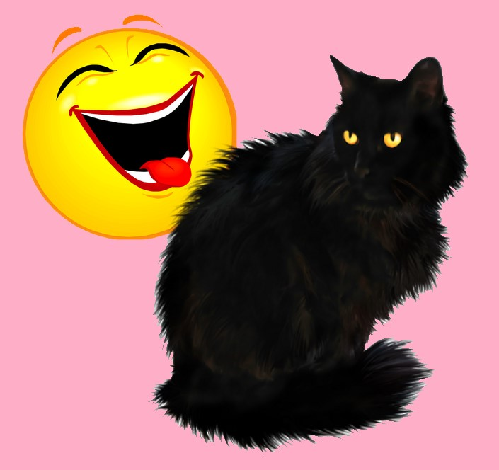 Do cats have a sense of humour?
