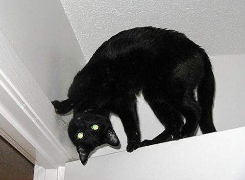 Picture of a black cat with what looks like a twisted head