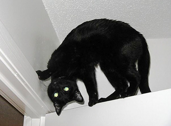 Picture of a black cat with what looks like a twisted neck or head