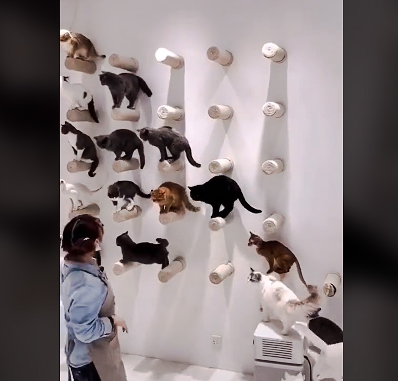 Picture of obedient and well trained cats who line up on wall climber