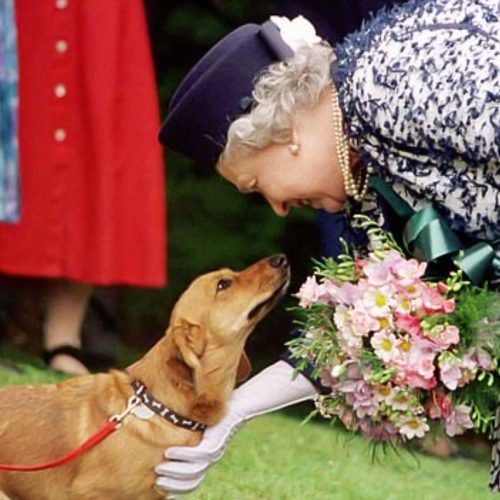 Queen Elizabeth II meets a dog