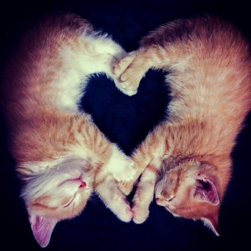 Sibling cats form a heart shape in a novel way
